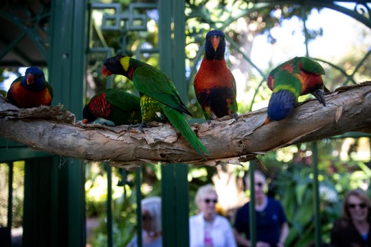 Lorikeets sit on a branch inside their new pavilion, Tuesday, Jan. 28, 2020, at the Everglades Wonder Gardens in Bonita Springs.