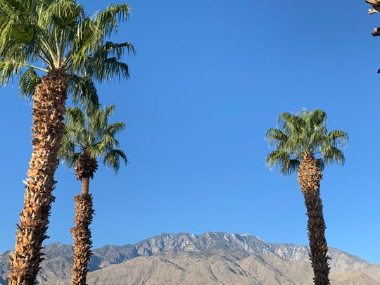 Light wind sways trees in Palm Springs Wednesday, Jan. 29, 2020. A wind advisory is in place for the Coachella Valley through the evening.
