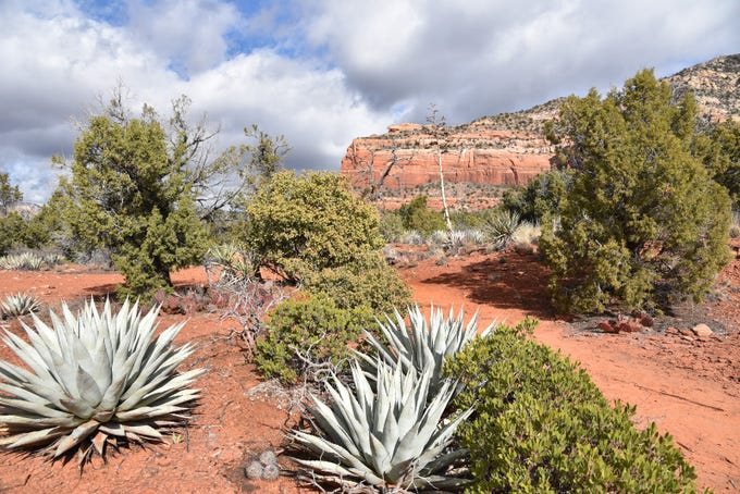 Lizard Head stands out over the Lower Chimney Rock Trail in Sedona.