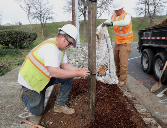 Jim Van Ornum, left, and Tim O'Connor of MR Construction finish planting a trident maple tree at the end of Oregon Street near Shasta Street on Wednesday, Jan. 29, 2020. About 100 trees are being planted in downtown Redding as part of a city project.