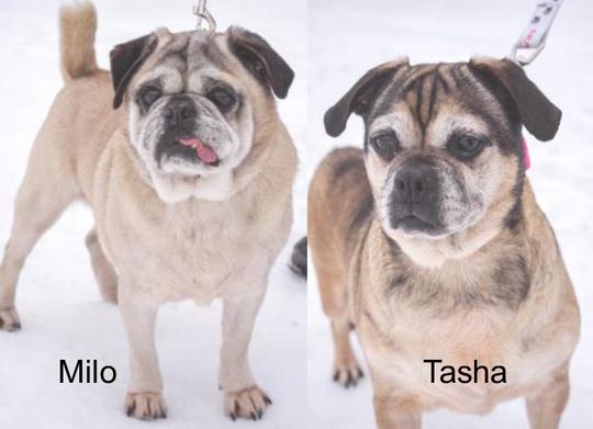 Milo and Tasha