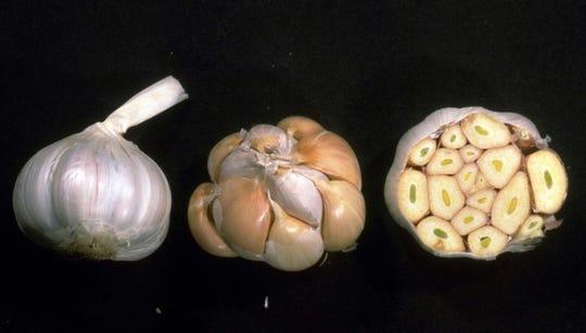 Garlic a great source of phytonutrients, vitamins C and B6, selenium, and manganese.