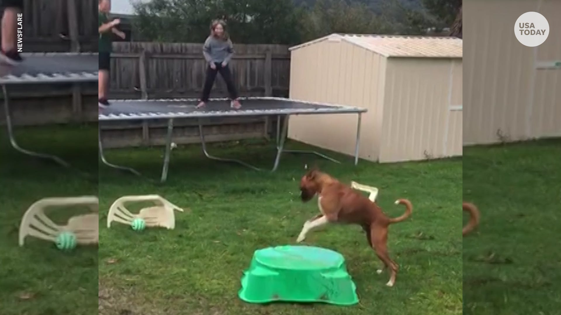 Hilarious boxer dog pretends to jump with laughing owners on trampoline