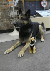 Bucyrus Police Department K-9 officer Harvey lies next to his plush toy counterpart.