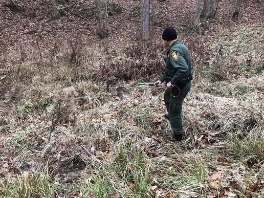 Indiana Conservation Officer Blake Everhart assisting in the capture and relocation of a bobcat found in Jackson County.