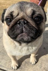 JoJo is headed to the prestigious Westminster Kennell Club Dog Show in New York.