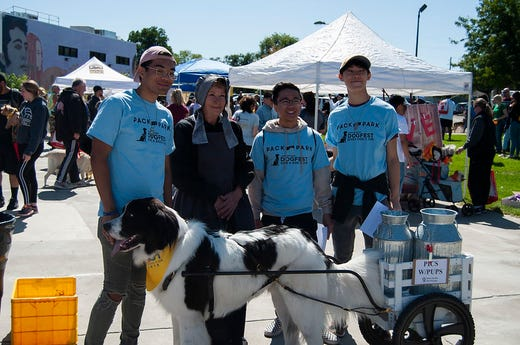 2019 Pack the Park DogFest event, a collaborative project with Canine Companions for Independence.