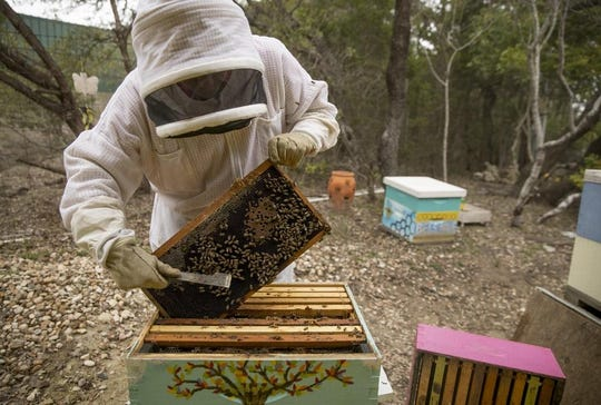 Tanya Phillips, owner of Texas Honey Bee Farm, shows one of the hives on Thursday January 30, 2020. University of Texas scientists are working on studies to reduce the global honeybee population decline.