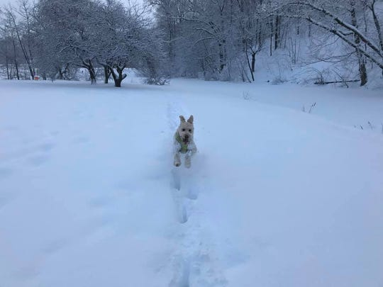 Henry has taught me how to embrace snow with gusto.