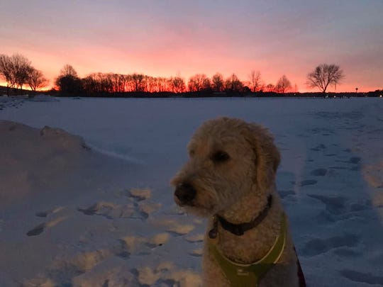 Henry didn't fully appreciate this spectacular mid-January sunrise.