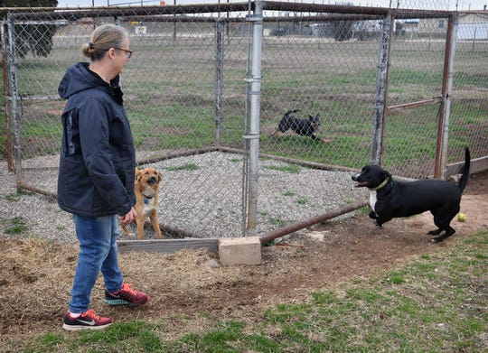 Three dogs run and play at Emily's Legacy Rescue with founder Kimber Hopkins.