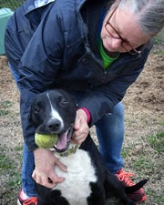 Kimber Hopkins plays with Daisy, one of the dogs at Emily's Legacy Rescue. The nonprofit is a foster-based rescue for dogs and cats.