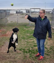 Kimber Hopkins, founder and president of Emily's Legacy Rescue, plays with Daisy, a three-year old Pointer mix at the organization's facility on Rathgeber Road.