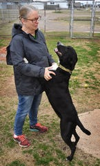 Daisy, a three-year old Pointer mix, greets Kimber Hopkins, founder of Emily's Legacy Rescue, at the facility on Rathgeber Road.
