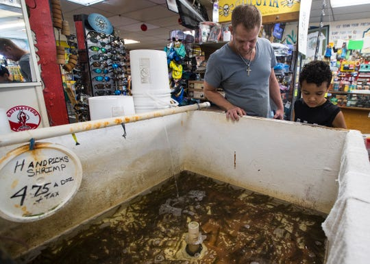 Justin Marecz and his son Xander, 7, check out available shrimp at D & D Matlacha Bait and Tackle Friday afternoon, January 31, 2020.The iconic and family-owned shop on Pine Island Road has been in business for 30 years. The city of Cape Coral  bought the property and may now sell the land.