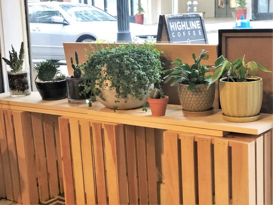 """Originally I started collecting plants that I grew up around or that I saw at my grandparents' house, anything that had sentimental value or that a friend had given to me,"" said Kendall Lilly, owner of Ivy Knoxville. ""Then it became this trendy thing and it has evolved into finding rare plants."" Jacks of Knoxville on Jan. 29, 2020."