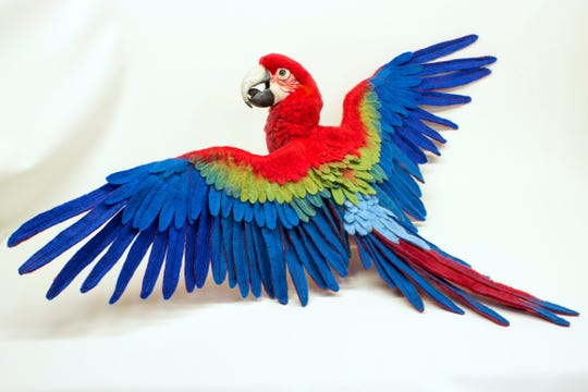 Lola, the green-winged macaw, illustrates the bright colors and both the wet and needle felting techniques. Parrots are Megan Nedds' favorite felting creation because of the use of many bright colors.