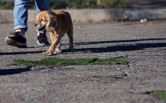A dog and its owner walk past potholes in Tucson at Fourth Avenue and 16th Street that were filled in with turf by Janet Miller, a resident in the Armory Park Neighborhood, and friend Elizabeth Garber.