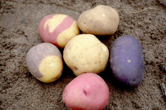 Many less-traditional varieties of potato add different flavor profiles and vivid colors to your cuisine.