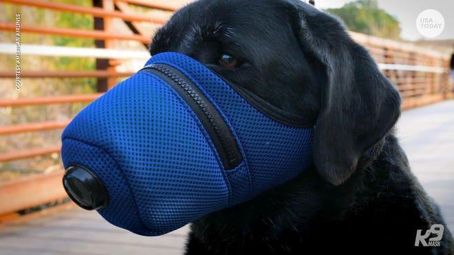 Coronavirus In Pa Pandemic Having Effect On Pets Shelters