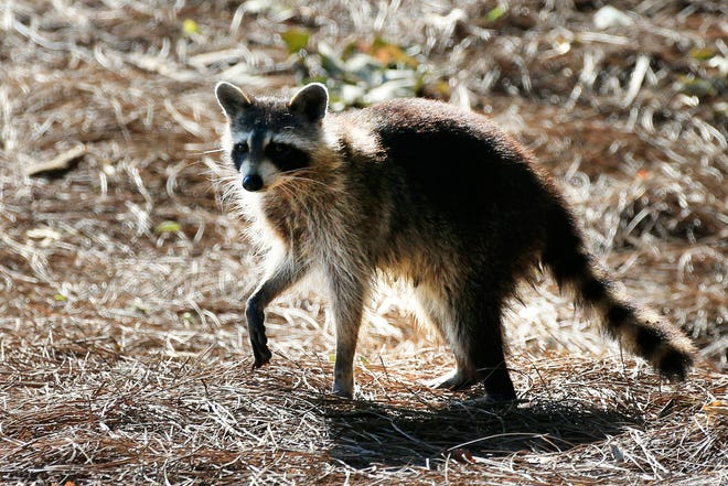 Wayne County has seen more positive cases of rabies this winter.