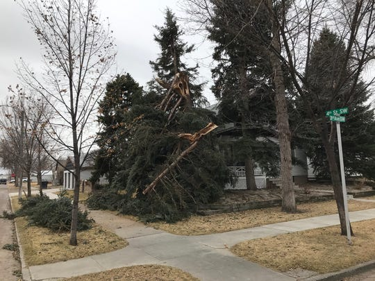 Downed tree branches on 3rd Avenue Southwest at 4th Street Southwest.