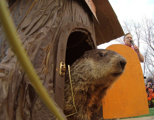 Woody, the Howell Conference and Nature Center resident groundhog, exited and stayed outside of her stump Sunday, Feb. 2, 2020 for the required count of 30 seconds to establish an early spring. Announcing the event is Nature Center CEO J.C. Carlson in the background.