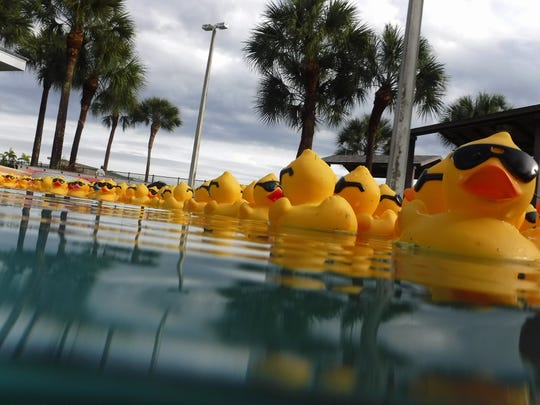 Ducks float along the race course during the second annual Great Naples Duck Race on Saturday, Feb. 1, 2020, at Sun-N-Fun Lagoon in North Naples. The NCH Safe & Healthy Children's Coalition offered a $10,000 cash prize for the winning duck.