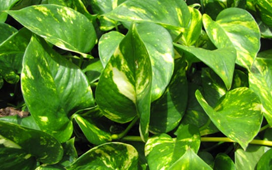 Learn at the Air Purifying Plant Seminar  which plants are best for keeping your air clean.