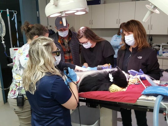 K.J., a male colobus monkey at Mesker Park Zoo & Botanic Garden, gets a stem cell infusion to treat his spinal arthritis.