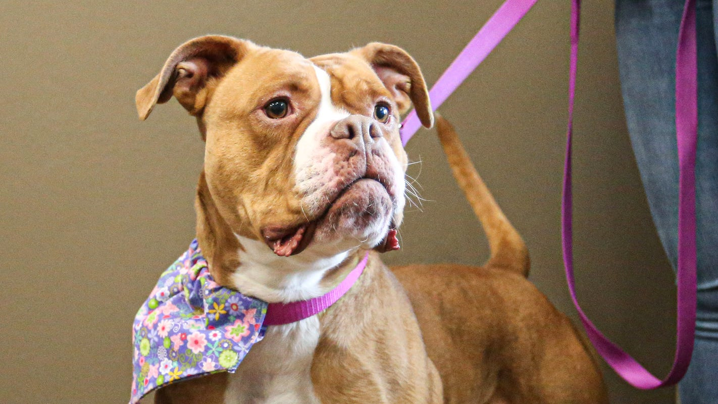 These homeless pets have been at shelters the longest in Fond du Lac, Oshkosh and Appleton