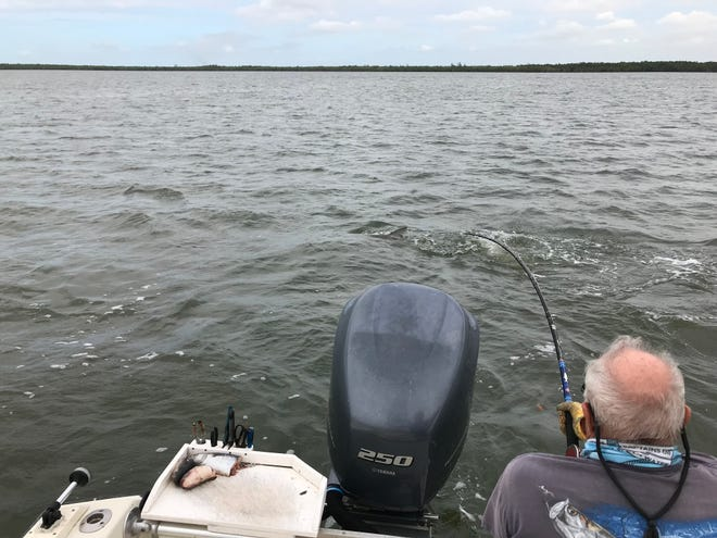 Jerry Geyer, of the Tarpon Hunters Club, battles his 917th fish of 2019's season.  He has only 29 to go to meet his goal of catching and releasing 1,000.