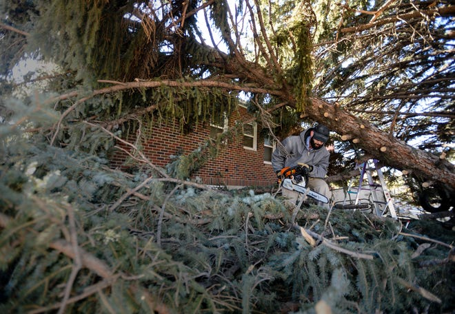 Dakota Cox cuts branches Monday morning from a downed tree, which fell on his mother's house at 202 22nd St.  S., during Saturday's record-breaking windstorm.