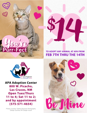 ACTion Programs for Animals'  Valentine Special 2020