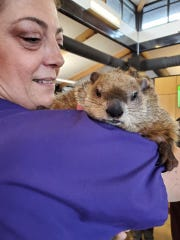 "Betsy Shank holds Poppy the groundhog over her shoulder. Poppy starred in Jeep's ""Groundhog Day"" commercial."