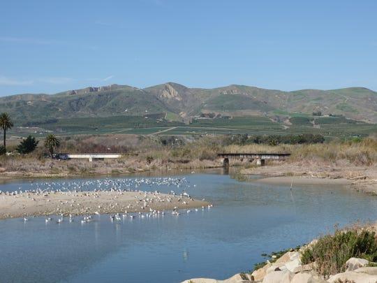 The Ventura River estuary