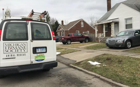 Officials said police found 21 dogs in a home on Detroit's west side Tuesday and believe they were part of a dog fighting ring.