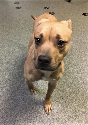 Sandy is waiting for a forever home at the Sandusky County Dog Kennel.