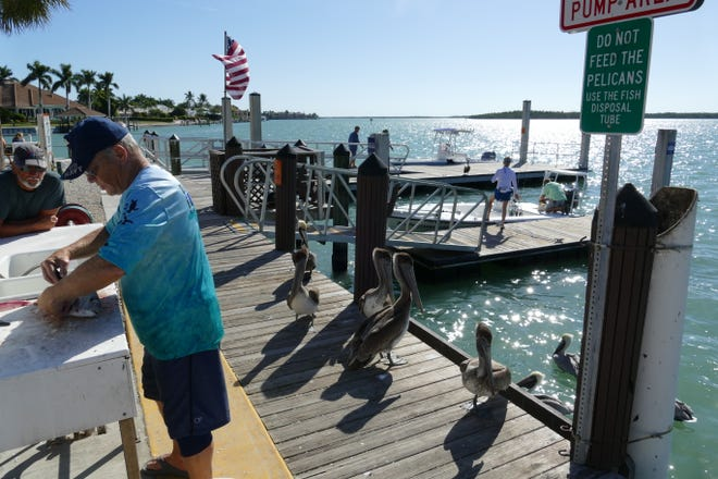 A man wearing a U.S. Navy blue hat fillets a fish at Caxambas Park as pelicans wait for scraps to accidentally fall on the floor on Feb. 4, 2020.