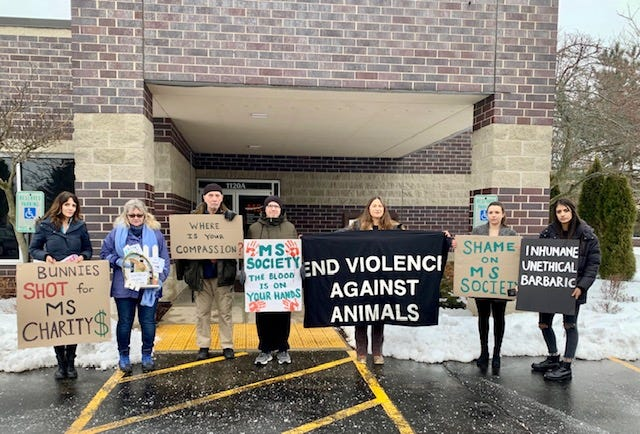 A group of activists against a rabbit hunt to raise funds for multiple sclerosis research protested outside the Wisconsin MS Society office in Hartland.