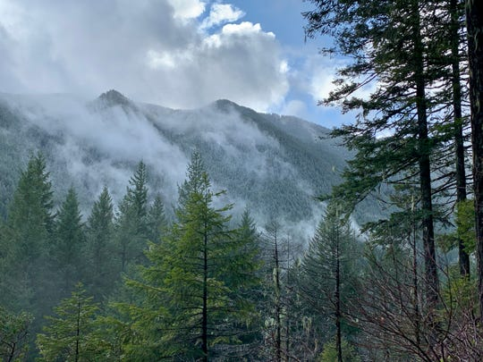 A winter hike and climb up Henline Mountain in the Opal Creek Wilderness east of Salem begins in green forest before ascending into ever more snow that often requires snowshoes and can get dangerous.