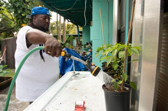 """Corey """"Goo"""" Paul waters pepper plants growing at his home garden Friday, Jan. 31, 2020, in Fort Pierce. Paul was inspired to start growing food after a visit to Nelson Family Farms and now, nearly all of his plants are grown from seed."""