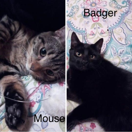 Mouse and Badger