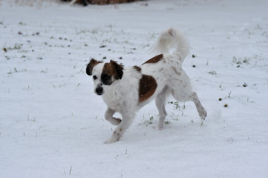 Every dog has its day and for Hank, of Abilene, it meant fun in the snow Wednesday.