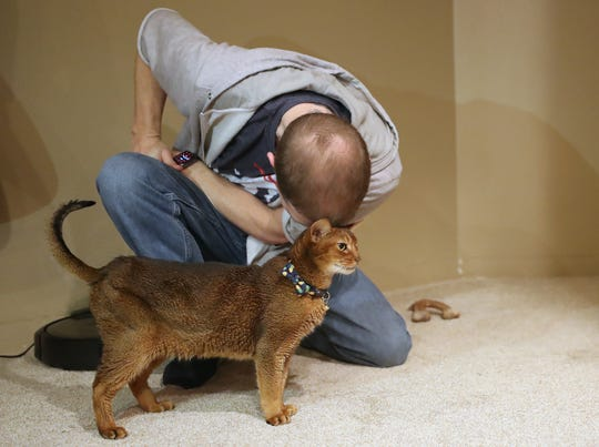 Helix, the Moe family's 5-year-old Abyssinian cat, rubs heads with Patrick Moe at their home in Port Orchard on Tuesday, Feb. 4, 2020.
