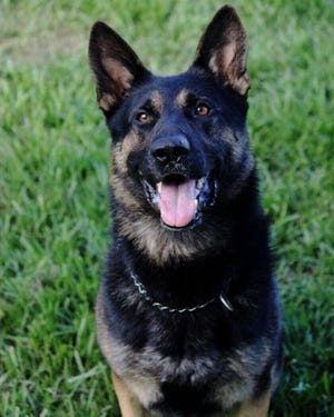 Titusville Police Department K9 officer Draco.