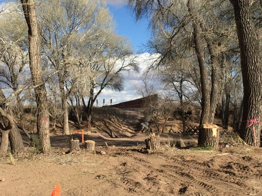 Cut down trees at the San Pedro River crossing at the US-Mexico border on Feb. 3, 2020 as border wall construction begins over the river.