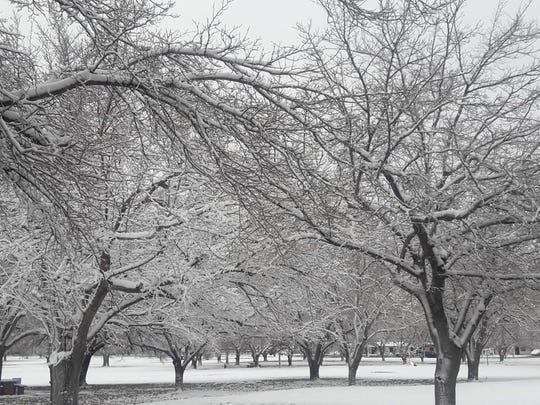 East El Pasoan Marianela Milner captured a snowy scene at Album Park Wednesday morning.