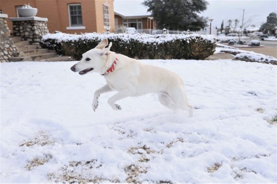 Matilda Lou the dog plays in the Cancellare family yard Wednesday morning,, Feb. 5, 2020.