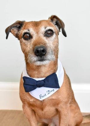 Man's best friend looks dapper in his wedding day look.